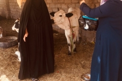 One of the amazing photos of an interview taken place in the rural area of southern Iraq